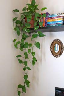 house plant2
